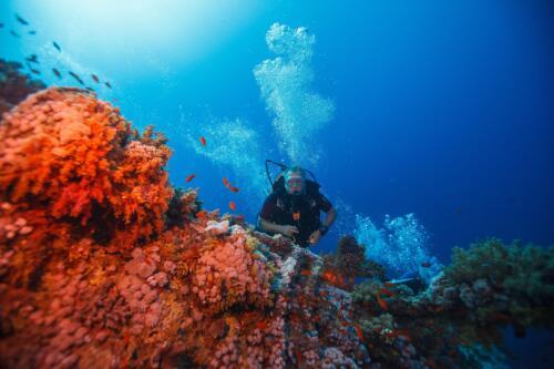 Rotes Meer - Unterwasser